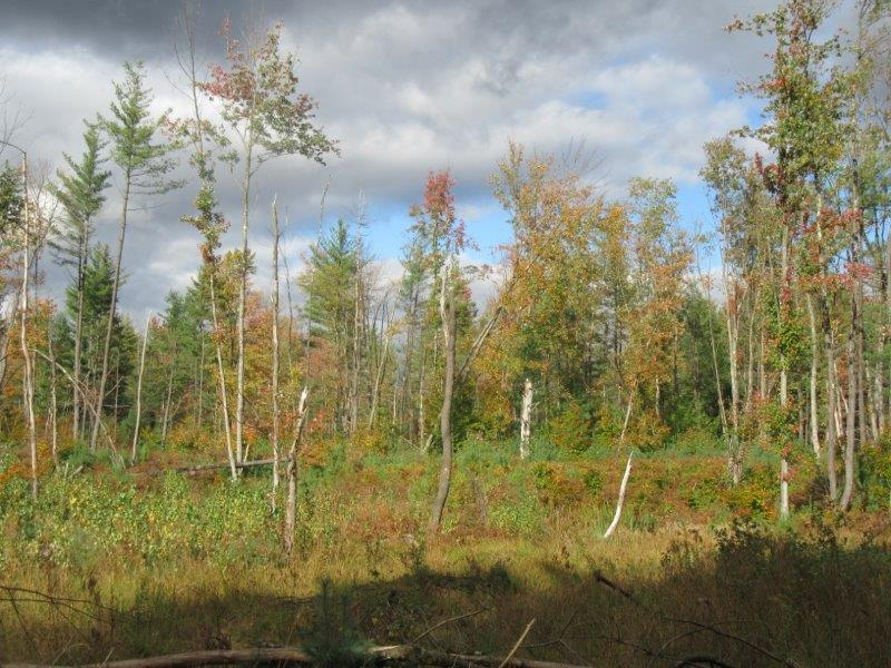 Northern Zone Hunting Land for sale
