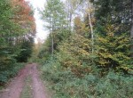 hunting land for sale Florence NY