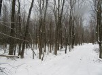 Driveway and woods land for sale