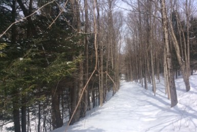 75 acres Hunting Land Lee NY