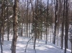 75 secluded acres land for sale near Delta Lake