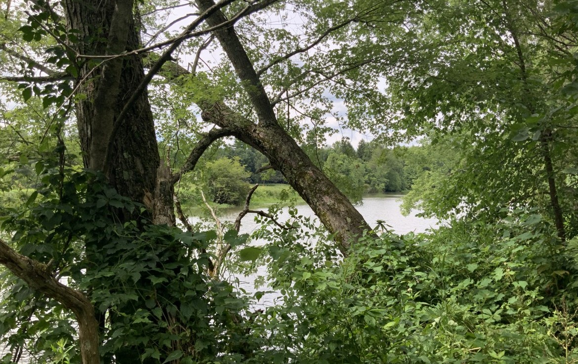 Hunting Land for Sale in Milford, NY!