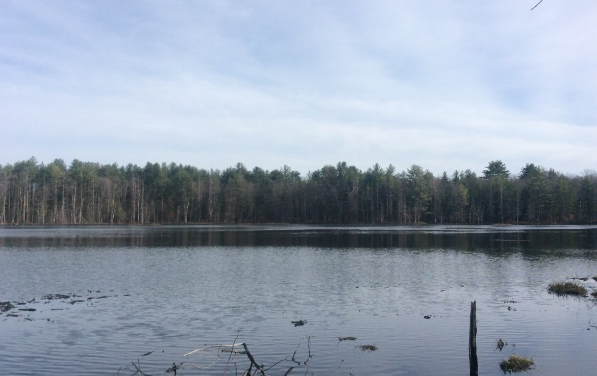 145 acres Hunting Land for sale with Waterfront in Vienna, NY!