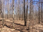 A 200 acre sportsmen's dream, Bordering the 7200 acre Beartown State forest.