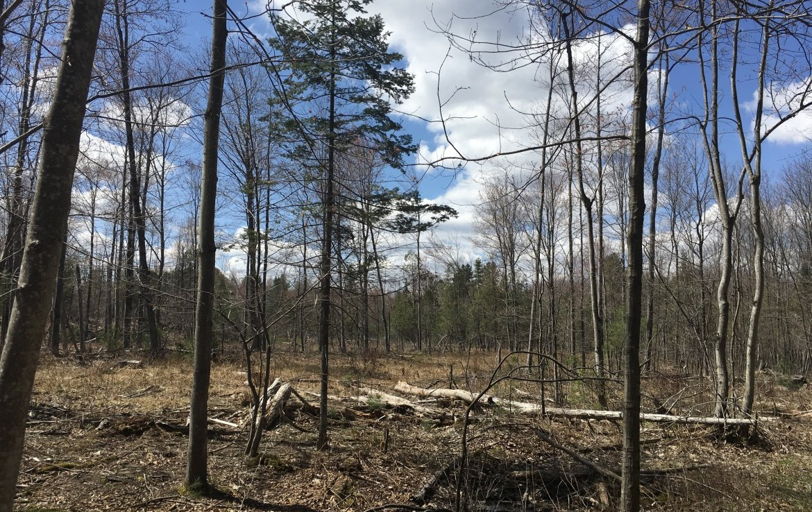 Located St. Lawrence County, this 51 acre lot borders state land on three sides.