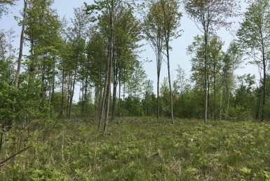 48 acres Secluded Building Lot Norfolk NY