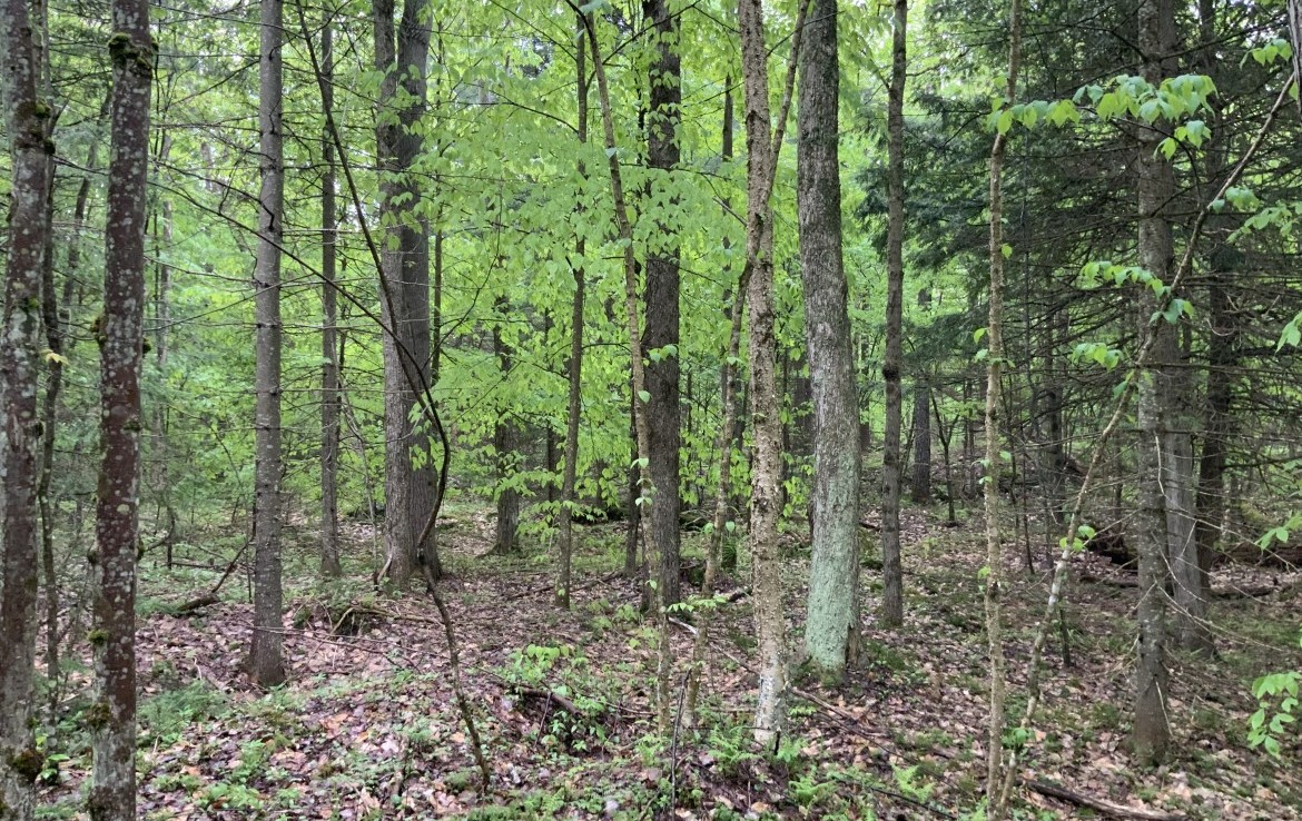 5.2 acres Hunting Land and Cabin with ATV Trail Access in Diana, NY!