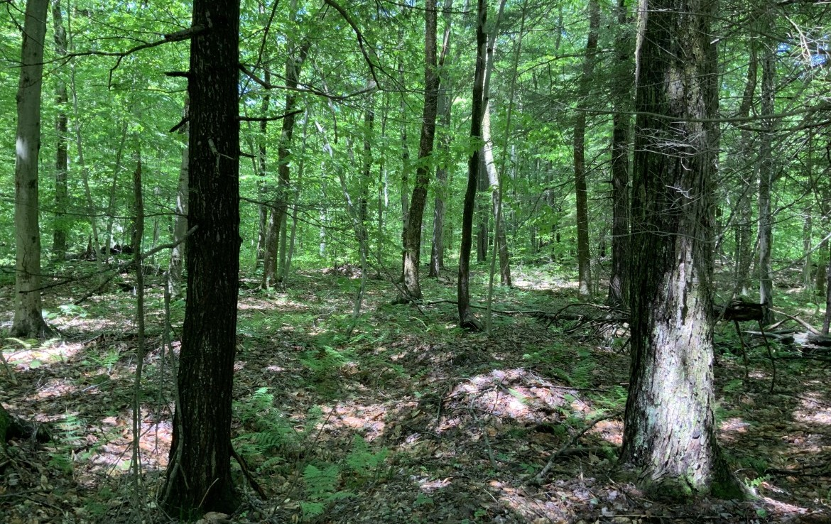 2 acres Land for sale, great for North Country Base Camp!