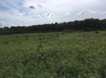5 acres Hunting Land for sale with access to State Forest in Florence, NY!