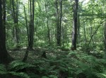 13 acres hunting land for sale in the town of Bombay in Franklin County, NY!