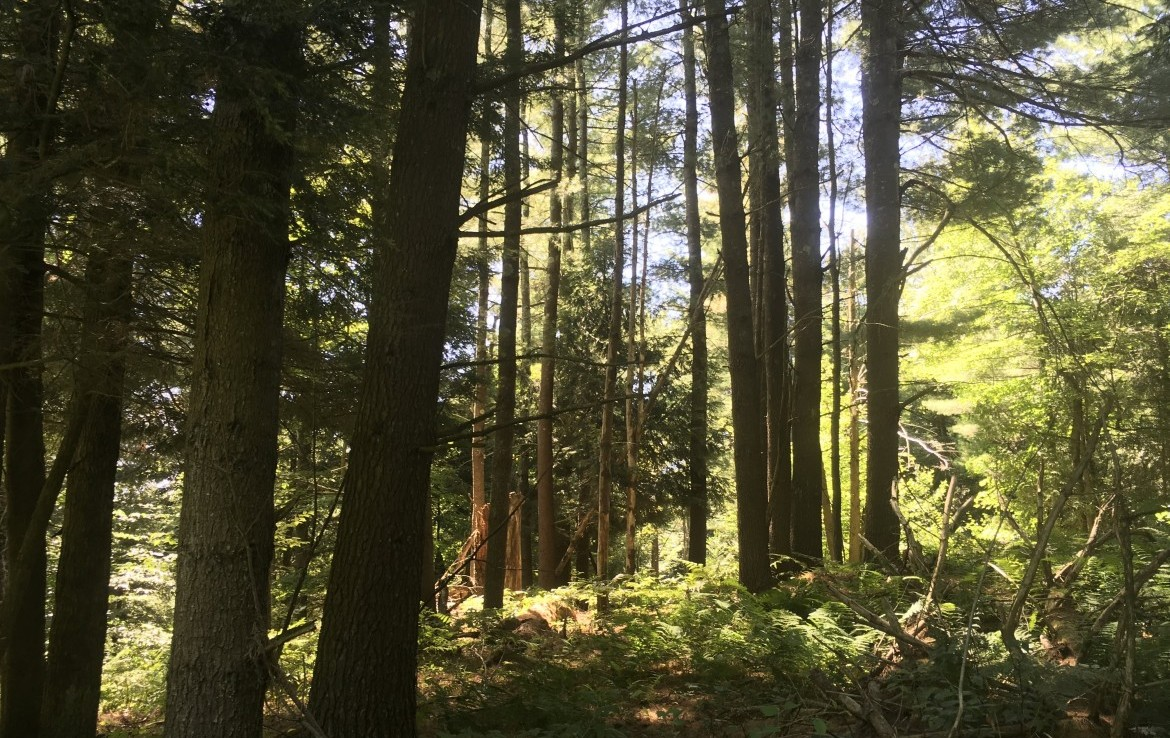 160 acres Hunting Land for sale with a Creek and Food Plot in Russell NY!