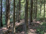 23 secluded acres with 16 x 24 hunting/ woodland camp.
