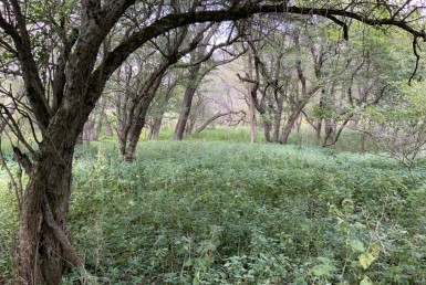 10 acres Whitetail Deer Haven Madison NY