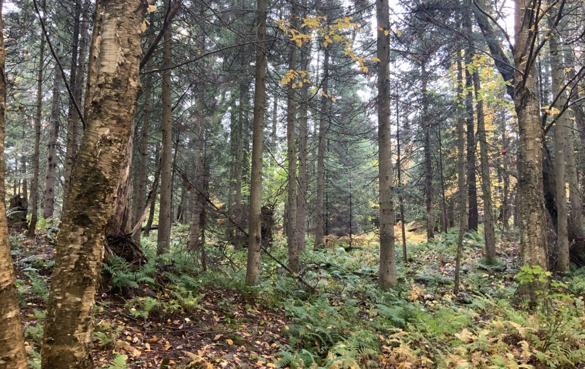 54 acres Hunting and ATV Land in Tug Hill