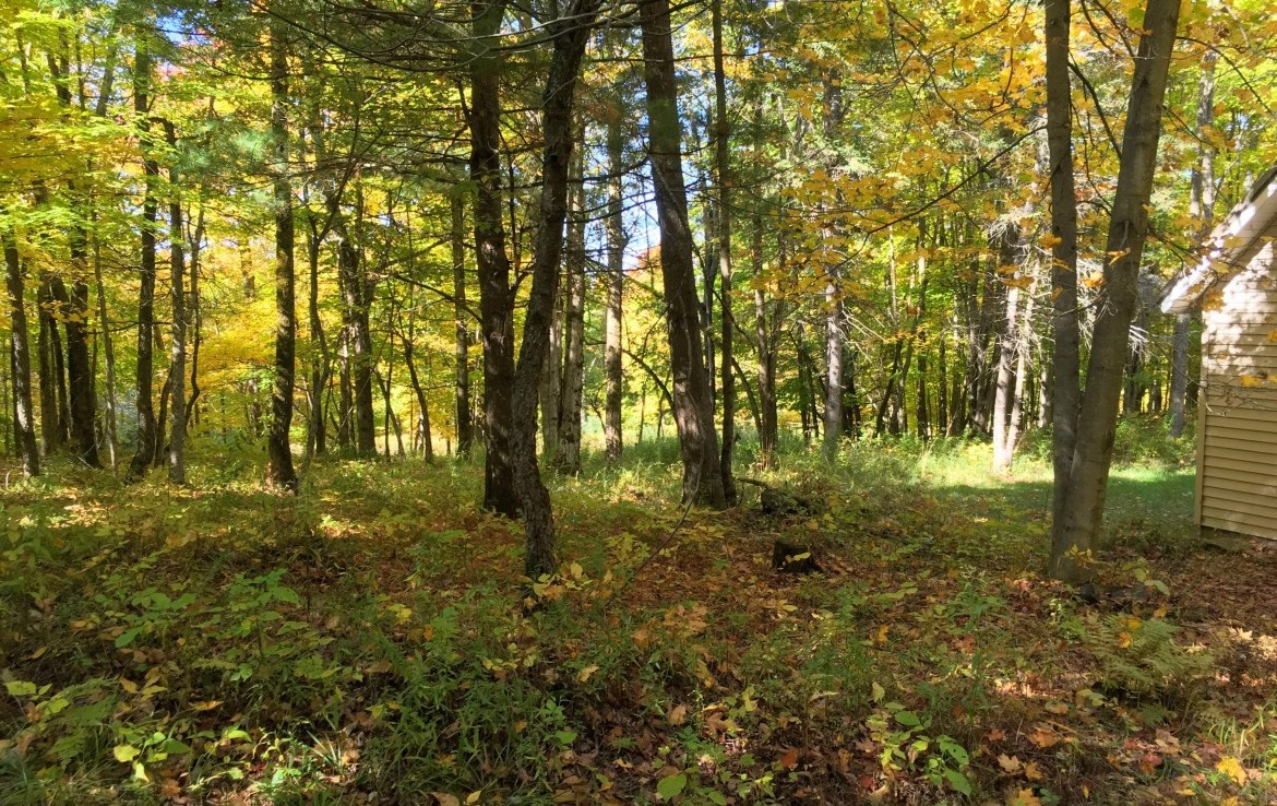 Open Grassy areas for planting food plots.