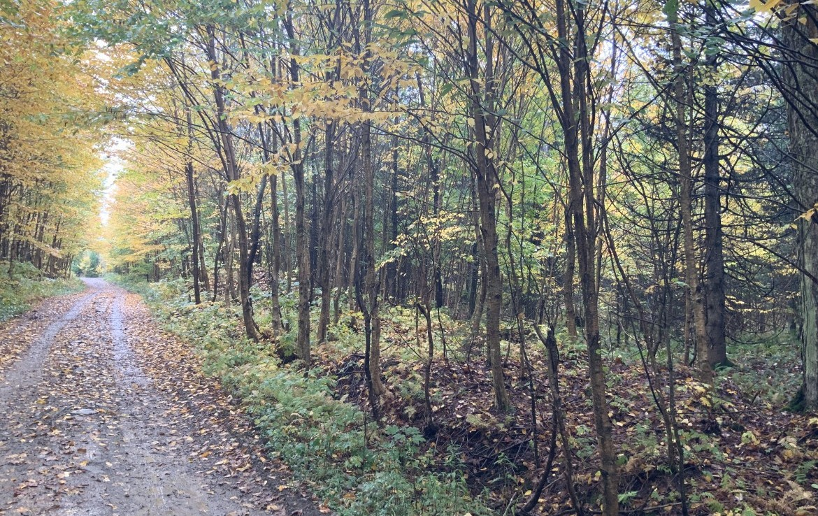 mixed woodlands, ridges and 1440+/- feet of trout stream frontage along Edick Creek