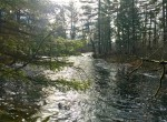 Great Hunting and Fishing Property With Rustic Cabin With Electricity and Well!