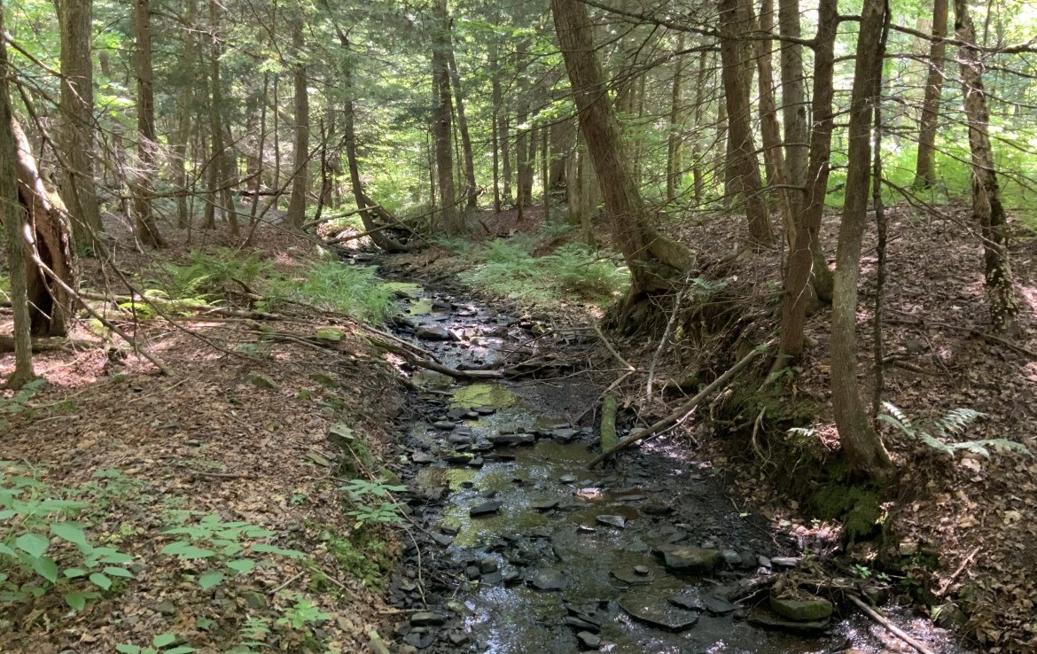 Deer Hunting Land for Sale in Chenango County!