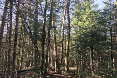 57 acre Cabin Site Bordering State Forest Diana NY