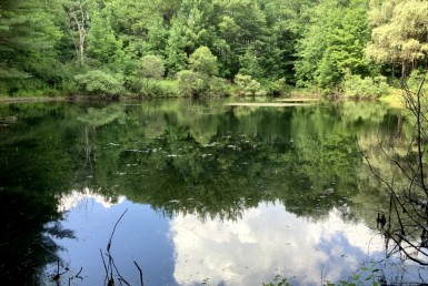 59 acres With Pond and Mature Timber New Berlin NY
