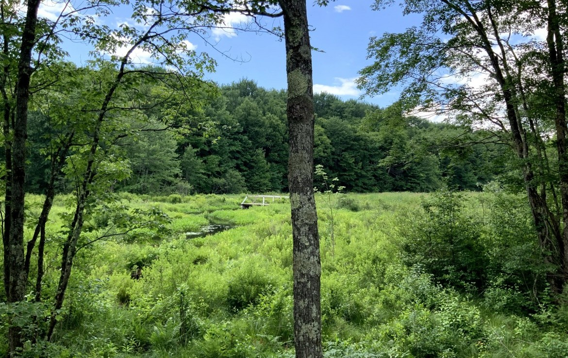 5 acres with cleared access and building site in Amboy, NY!