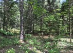 Secluded Camp Lot on Paved Road with Electric Available!