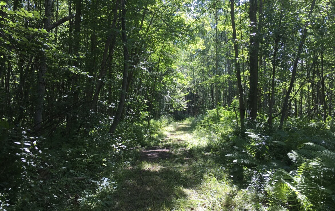 477 Acre Sportsman Paradise For Sale in the St. Lawrence Valley, Lisbon NY!