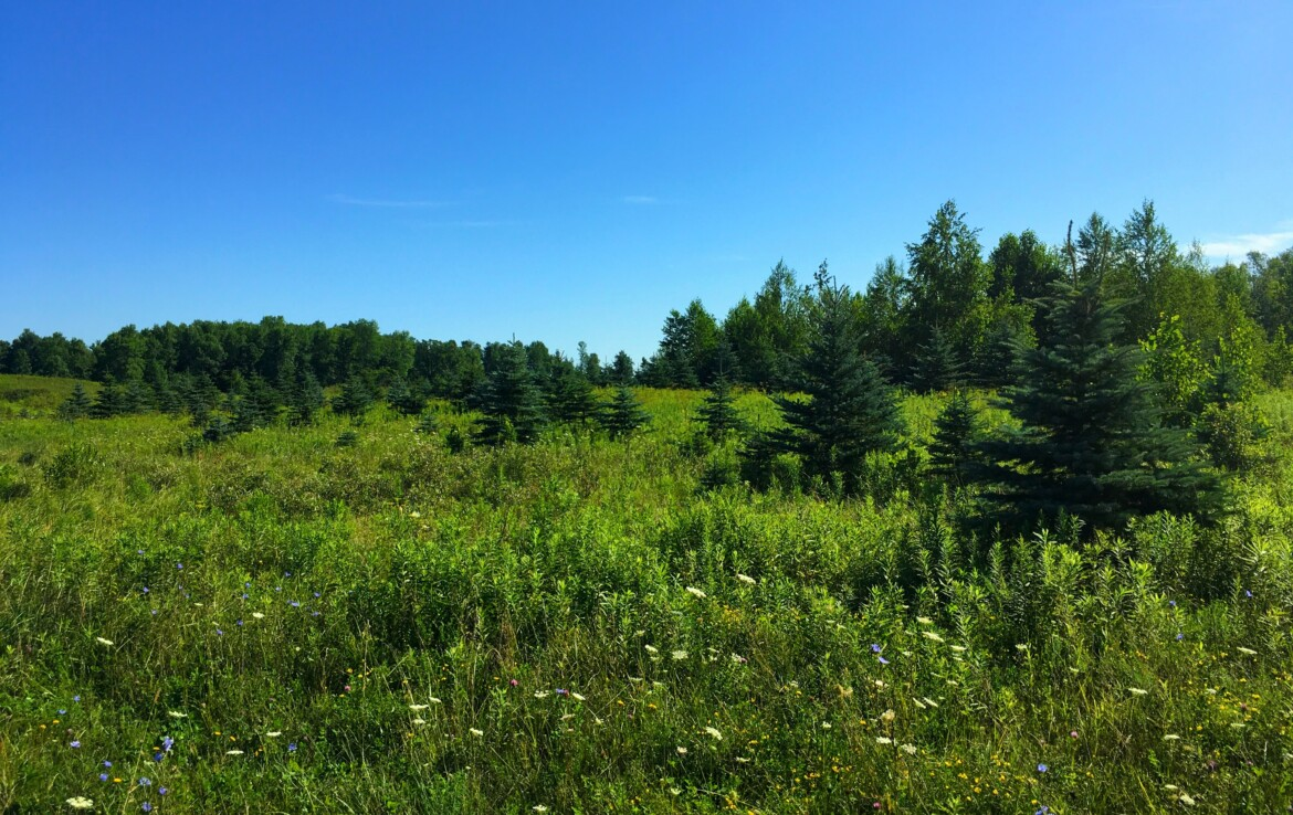 Ideal Hunting Property with Ponds, Fields, Woodlands, and Trails!