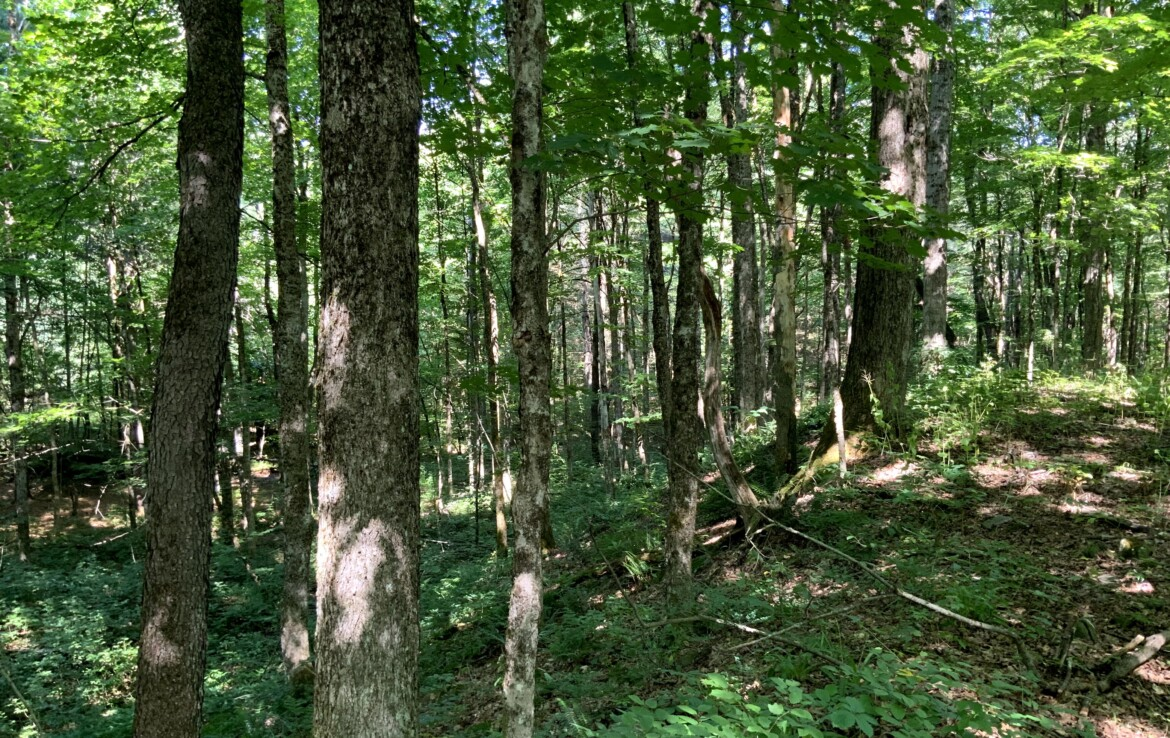 Hunters Paradise with Rolling Woodlands, Ridges, and Creek!