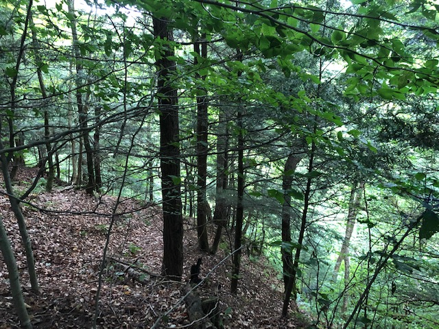 Off-Grid Camp Lot with Driveway and Access to Snowmobile/ATV Trails!