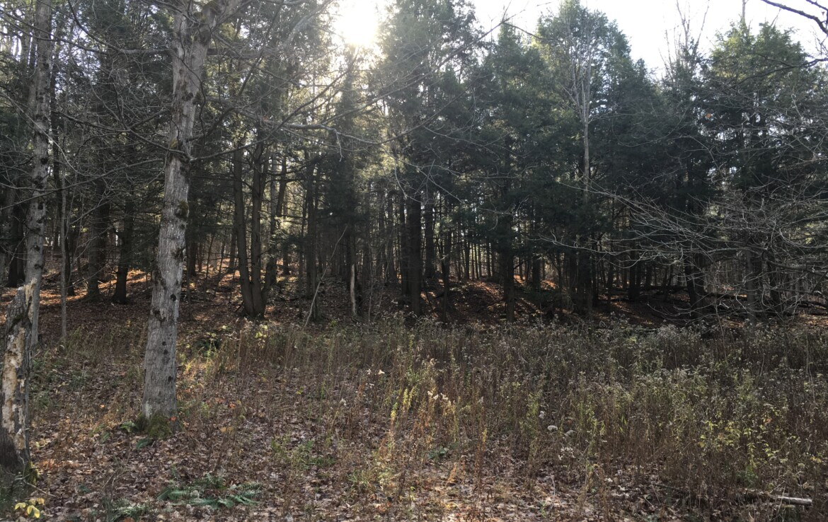 15 acres of North-Woods Hunting Land Hermon NY