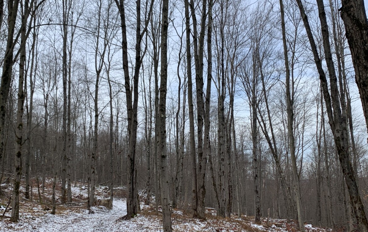 61 acres Southern Tier Prime Hunting Land Norwich NY
