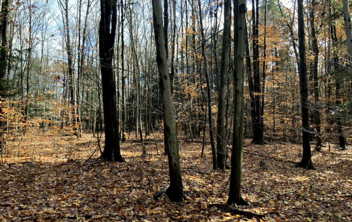 50 acres of Southern Tier Hunting Land for Sale with Homesite, Tioga, NY!