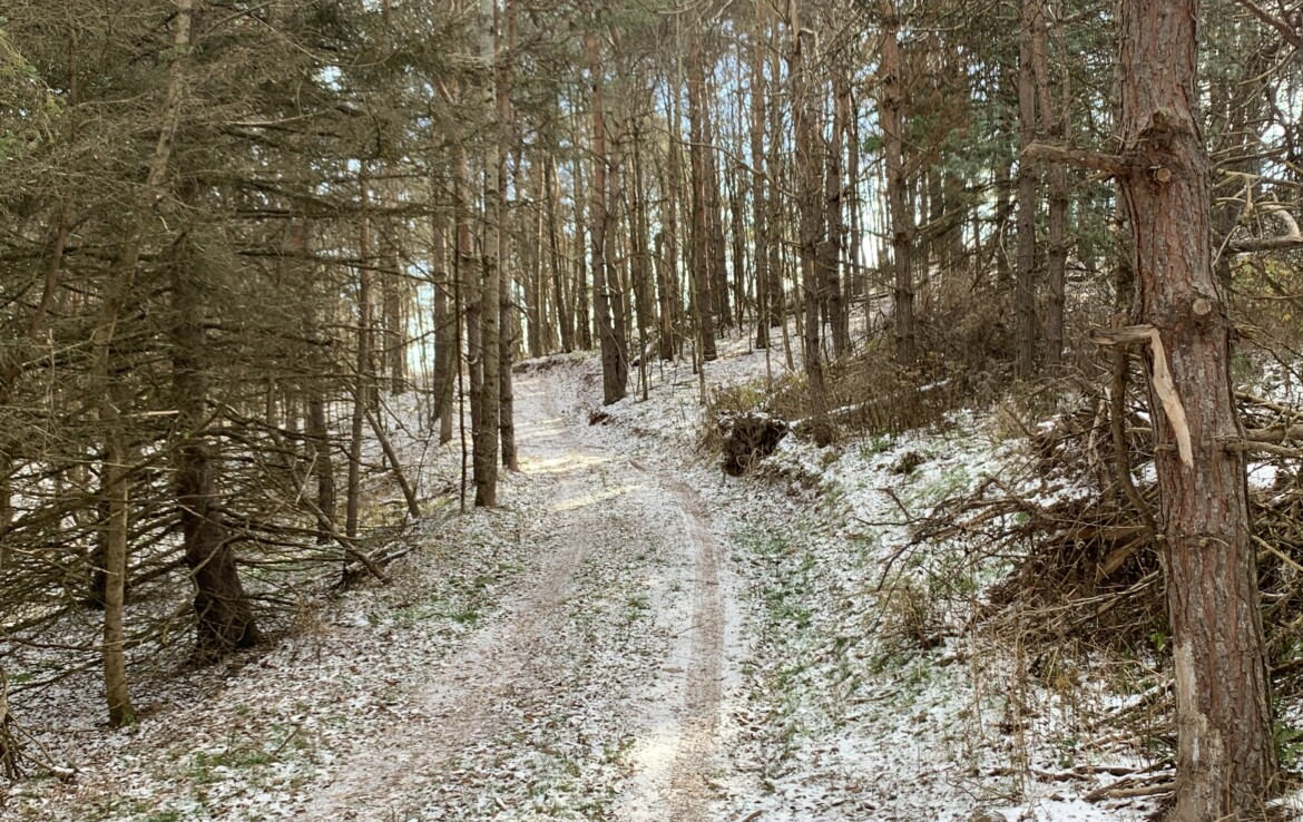 61 acres of Southern Tier Hunting Land For Sale, Norwich, NY!