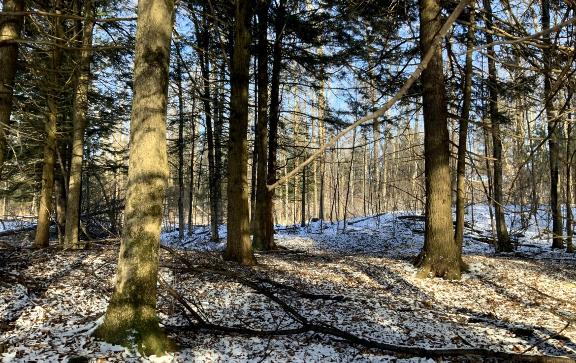 93 acres Hunting Land with Building Sites Florence NY