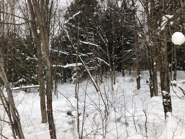 5 acre Building and Camp Lot Williamstown NY