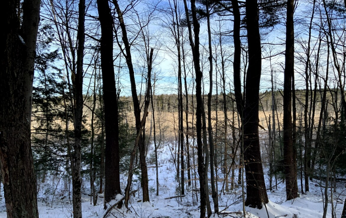 41 acres Hunting Land for Sale on Private Road, Amboy, NY!