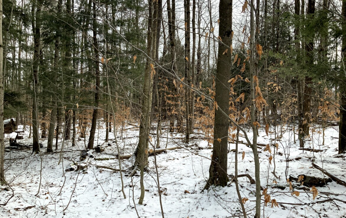 Close to Stateland and Snowmobile Trails with Electic Available at Road!