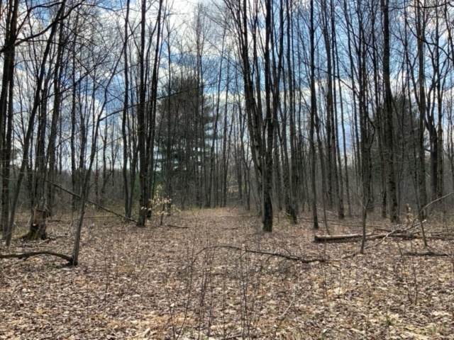 60 acres Hunting Land Close to Salmon River Albion NY