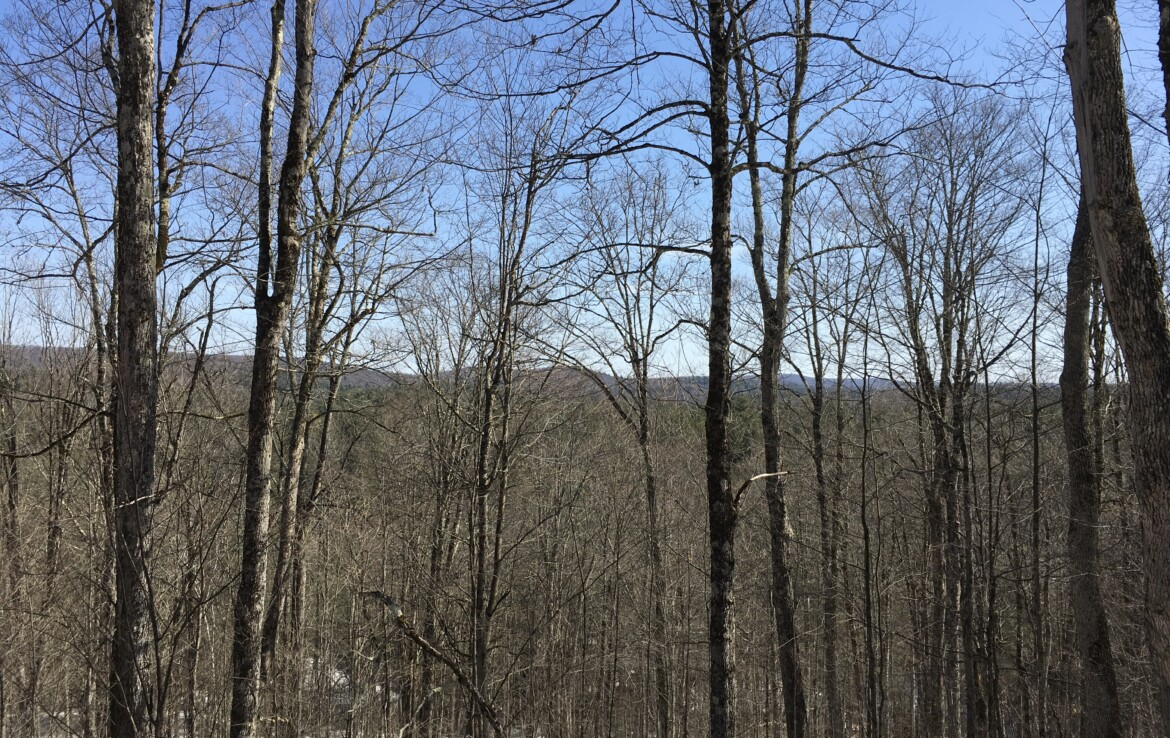 700 Feet on the Oswegatchie River with Scenic Views and Timber!