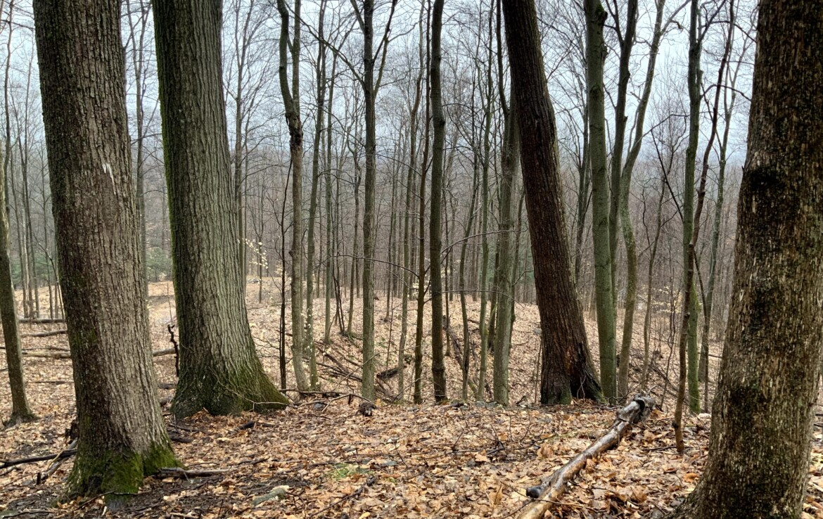 Wooded Property with Electric, Ideal for Camp/Country Home and Hunting!