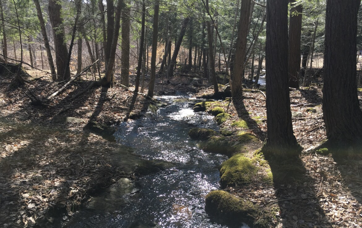 Rolling Wooded Acerage with Stream, Bordering State Land!