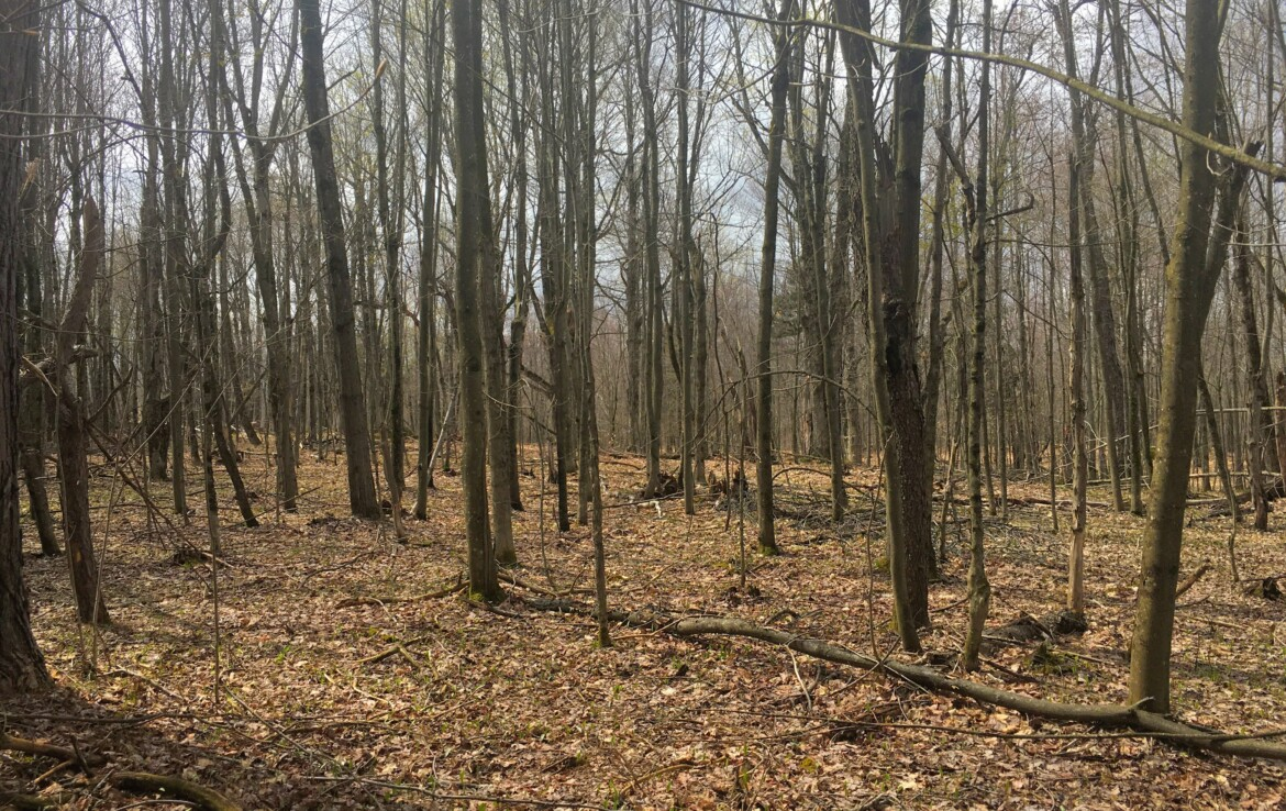 Ideal Adirondack Backwoods Cabin Site with Creek and Interior Trails!
