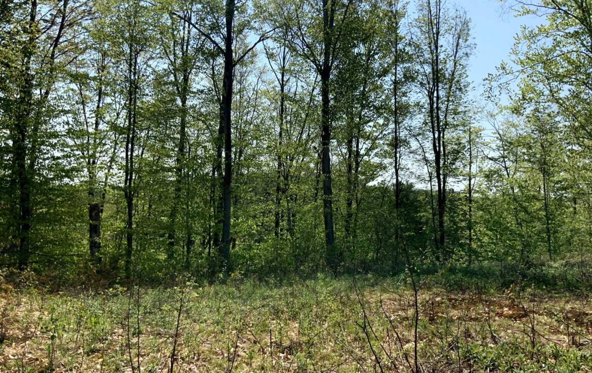 12 acres Land for Sale with Hilltop Building Site, Lyonsdale, NY!