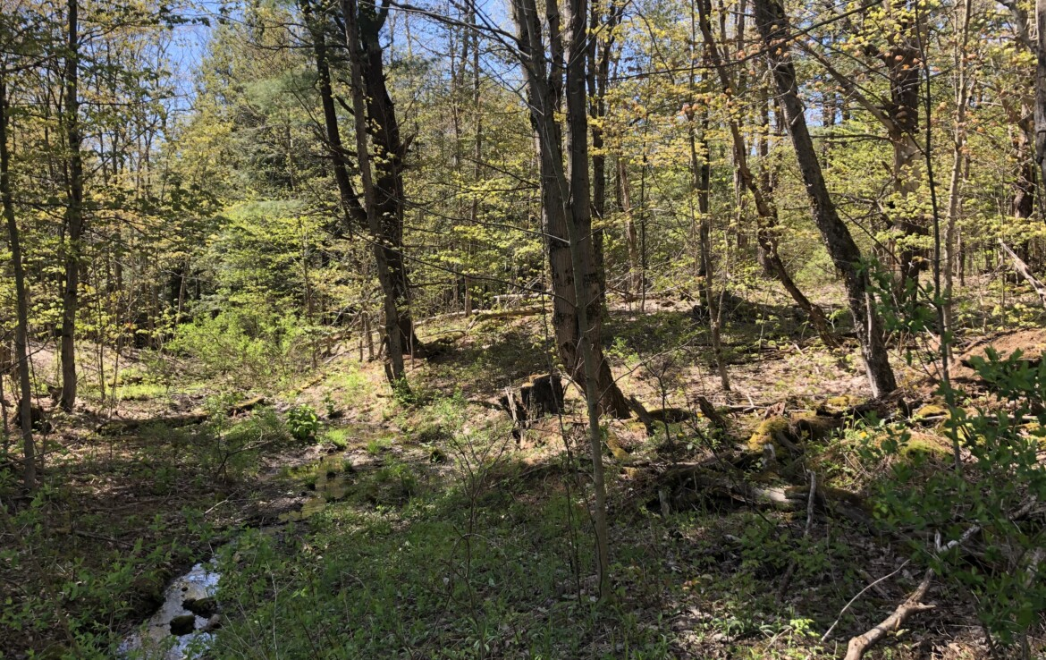 Tug Hill Wooded Family Getaway with Creek and Access to Snowmobile Trails!
