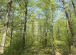 """Secluded """"Bigwoods"""" Northern Zone Hunting on Snowmobile Trail!"""