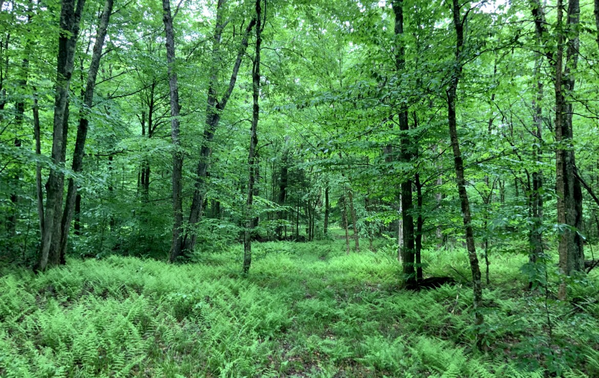 15 acres Hunting Land Bordering Conservation Easement Lewis NY