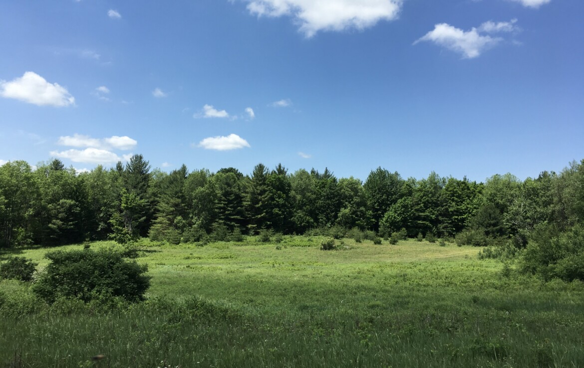 116 Acres Forested Hunting Land for Sale in Pierrepont NY!