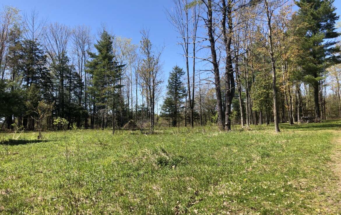 Camp or Build an Off-Grid Cabin with Beautiful Clearing and Pond!