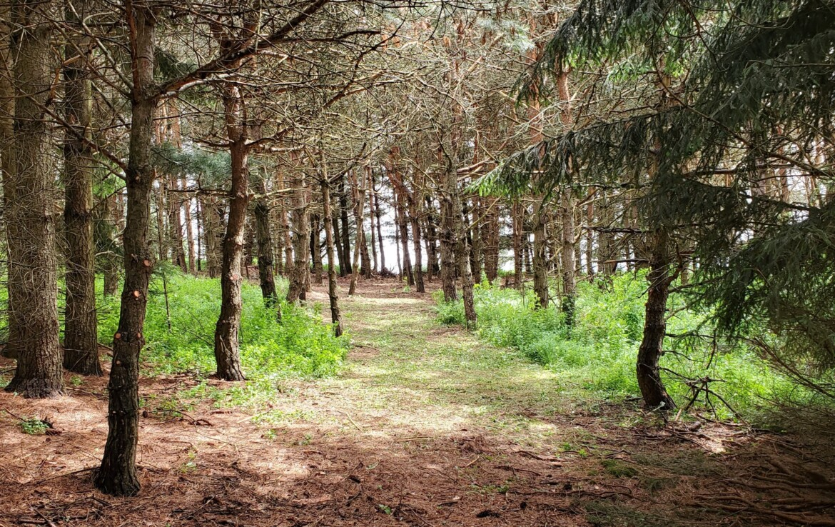 Ideal Hunting Camp Location With Clearing, Near State Land!